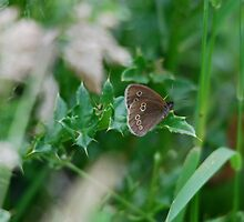 Ringlet Butterfly by dougie1