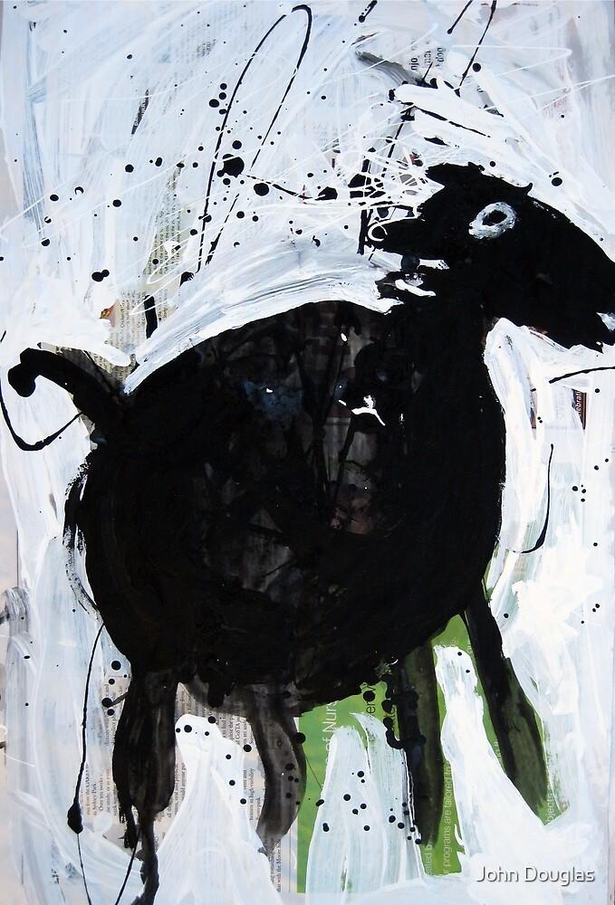 Black Horse 3  by John Douglas