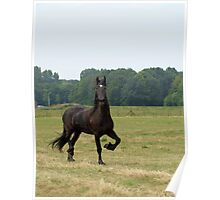 Friesian horse from a distance Poster