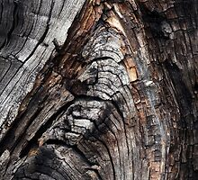 Wood 4 by Yampimon