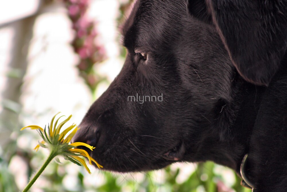 STOP AND SMELL THE DAISY by mlynnd