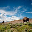 Home on the Range by Melinda Kerr