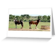 Clydesdales - Mare and Stallion Greeting Card