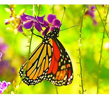 Colorful Butterfly Photographic Print