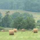 Hay Rolls by Cathy Cale