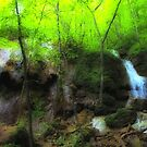 Falls Ridge Preserve, VA - 2 by virginian