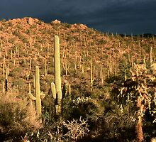 Thunderstorm over Saguaro by cclaude