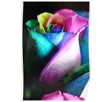 Rainbow Roses 14 Poster