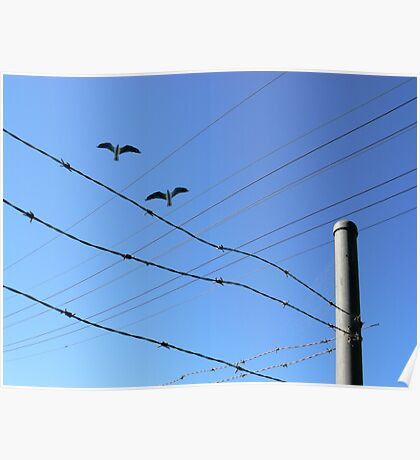 Fly By Wire. Poster