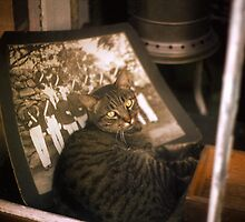 Window Tabby by Jay Gross