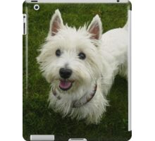 Furry West Highland Terrier