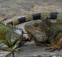 Iguana Tell You Something by Catherine Sherman
