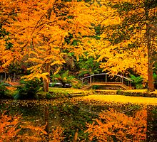 The lake at Alfred Nicholas Gardens in autumn in portrait by Elana Bailey