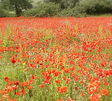 The Poppy Field by Catherine Hamilton-Veal  ©