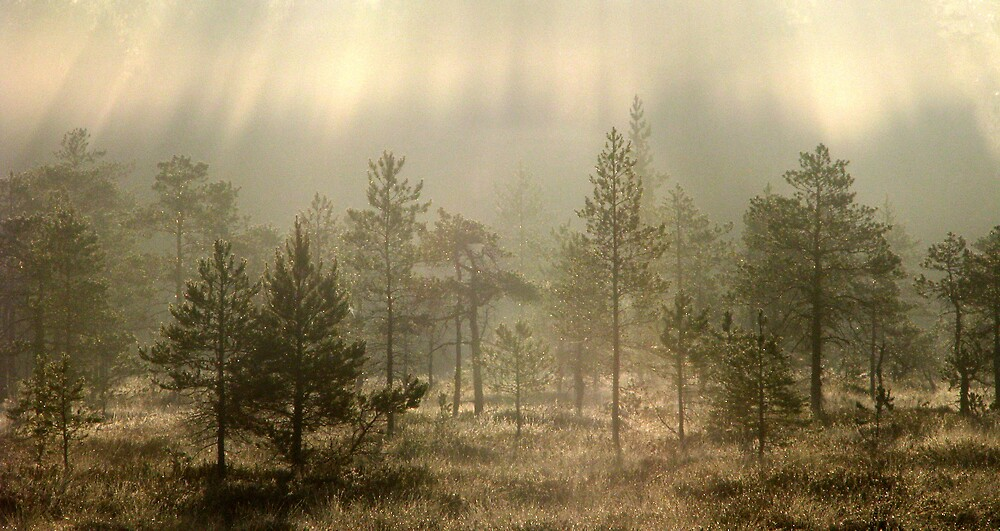 Rays of New Day by Petri Volanen