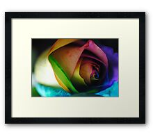 Rainbow Roses 18 Framed Print