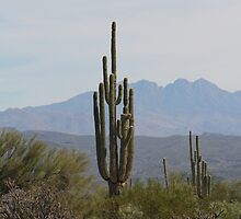 Saguaro, MacDowell Mountain Regional Park by kgarrahan