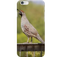 Quail on a Fence iPhone Case/Skin