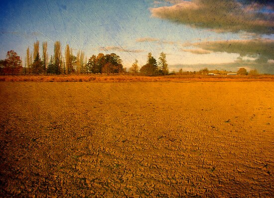 Parched - Dangars Lagoon, Northern Tablelands, NSW, Australia by Kitsmumma
