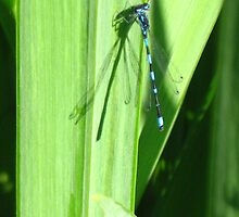 Blue Waterlady and her shade  by steppeland