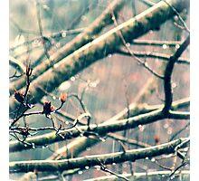 Light Rain Photographic Print