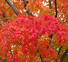 The Scarlet Tree by Linda Miller Gesualdo