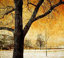 Rusty Sky by Tara  Turner