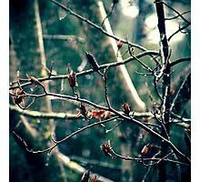 Dark Rain Photographic Print