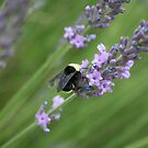 Bumble Bee by SKNickel