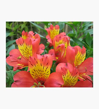 Pretty Red Flowers Photographic Print