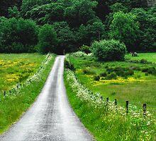 """Country Road"" by Bradley Shawn  Rabon"