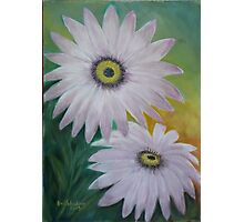 African Daisy  Photographic Print
