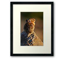 Sunset Pika Framed Print