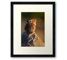 Sunset Pika Framed Print