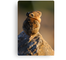 Sunset Pika Metal Print