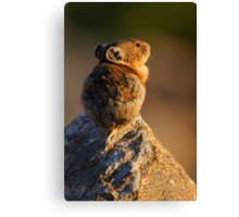 Sunset Pika Canvas Print