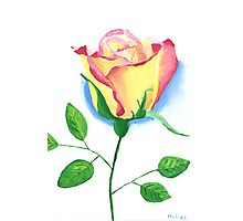 A Single Rose Photographic Print