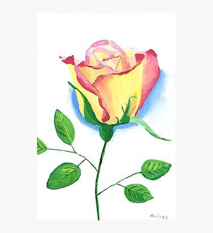 A Single Rose Photographic Print