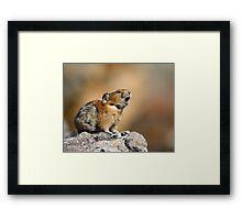 Pika Howling Framed Print