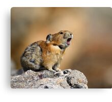 Pika Howling Canvas Print