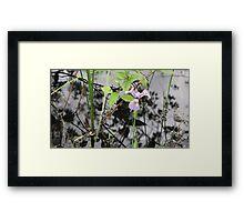 Lonely Iris Framed Print