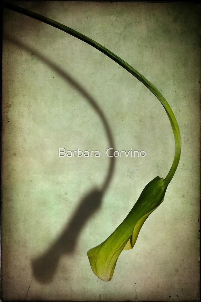 Falling calla by Barbara  Corvino