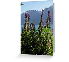 Alpine Lupins Greeting Card