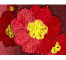 Red Evening Primrose Photographic Print