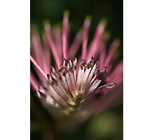 Alien or Flower? Photographic Print