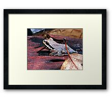 Small Frog Framed Print