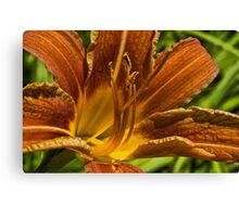 Miss Lilly up close Canvas Print