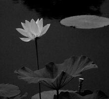 Lotus #51 by Janos Sison