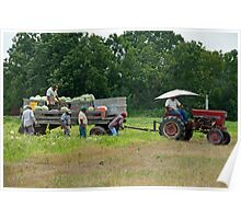 Harvesting Watermelons Poster