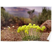 Wild flowers of Northern Nevada Poster